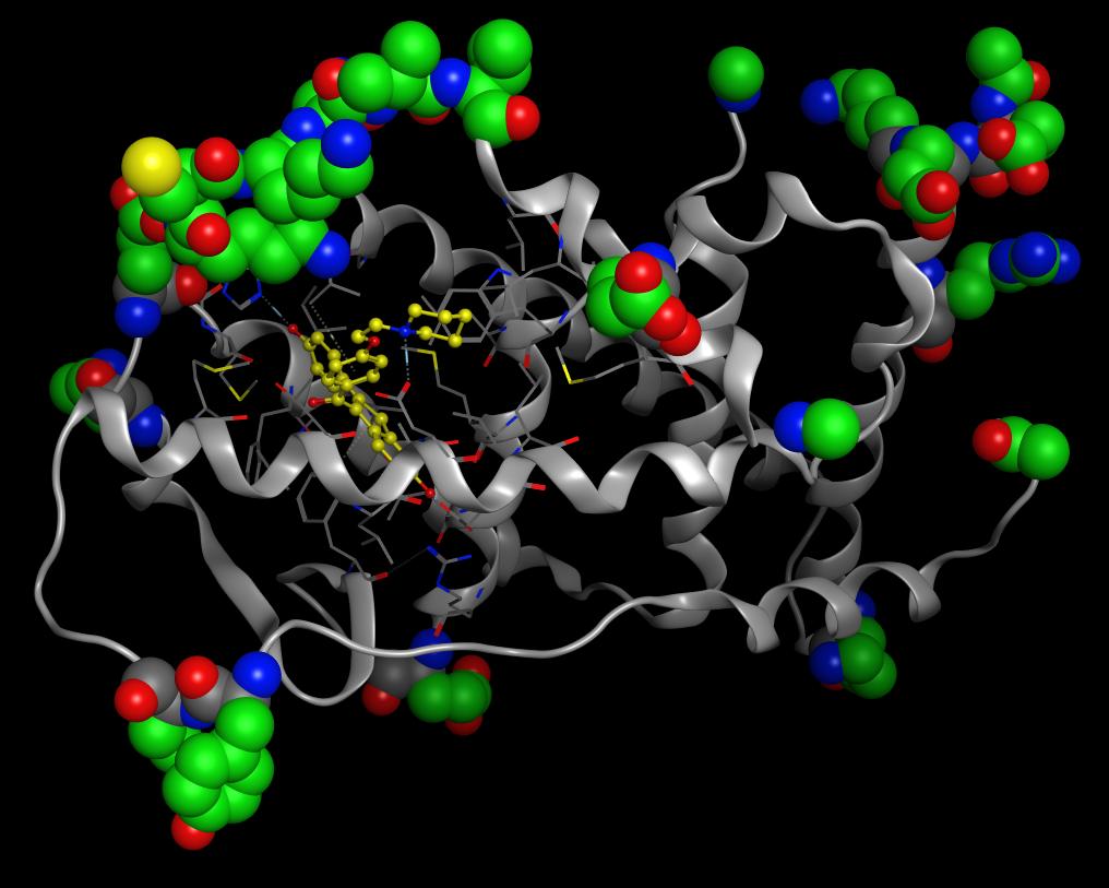 タンパク質立体構造の問題点の確認と修正