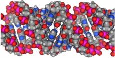 大きな分子に対応